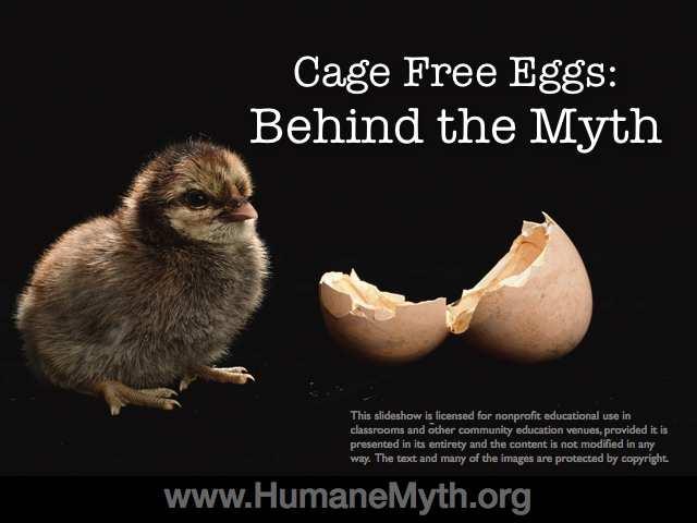 cage free eggs slideshow