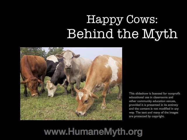 happy cows slide show